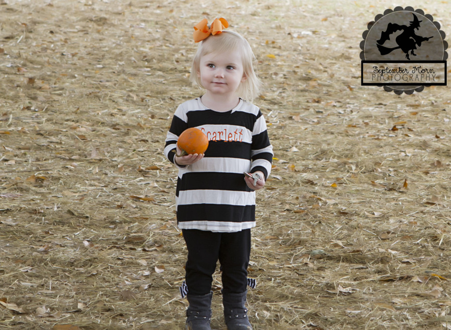 pumpkin10(web)