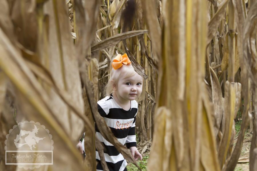 pumpkin2(web)